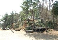 大正池グリーンパーク